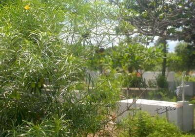 plantas-cementerio-Chongon-JP